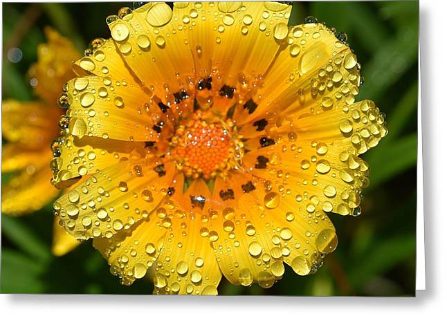 Reflection In Water Greeting Cards - Flower Reflection in Water Drops Greeting Card by Linda Brody