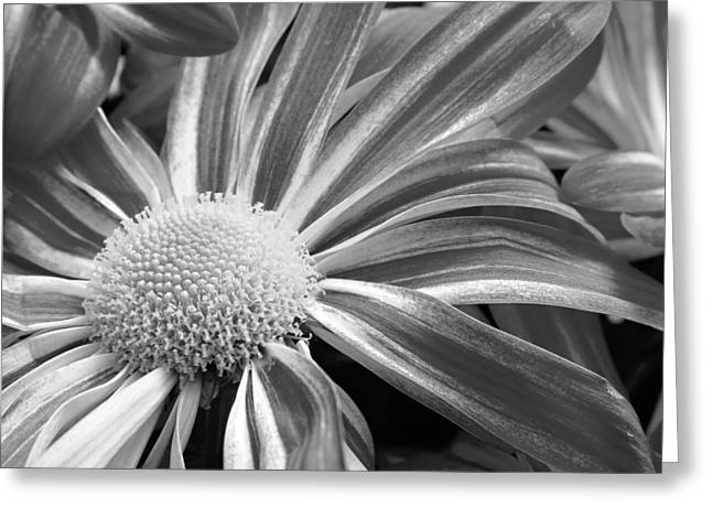 Flower Run through It Black and white Greeting Card by James BO  Insogna