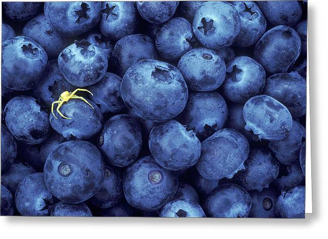 Flower Spider On Blueberries Greeting Card by Greg Vaughn