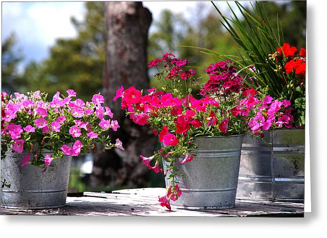 Flower Photos Greeting Cards - Flower Wagon Greeting Card by Susanne Van Hulst