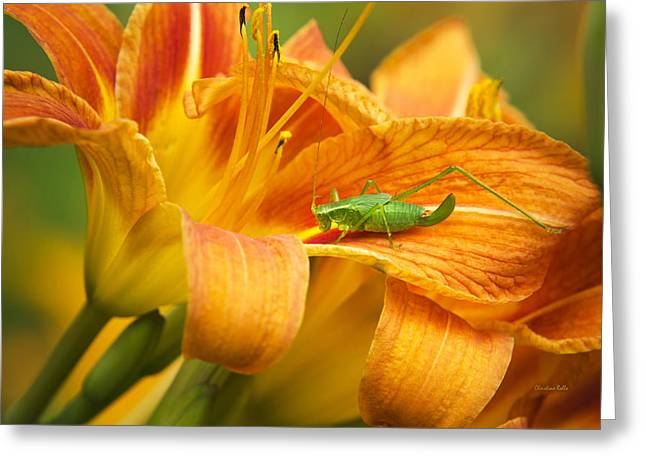 Katydid Greeting Cards - Flower With Company Greeting Card by Christina Rollo
