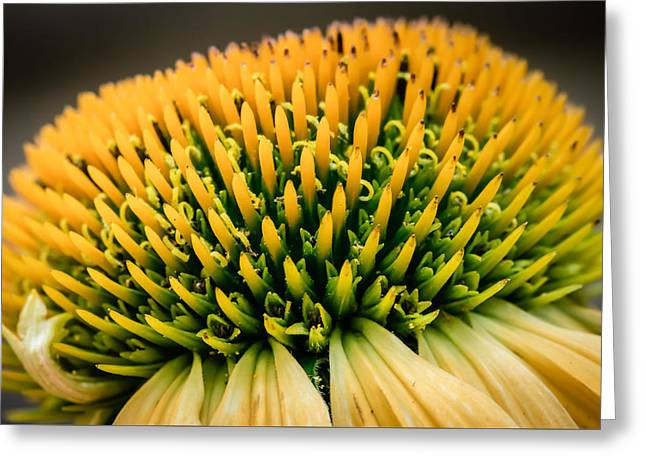 Black Top Greeting Cards - Flower - Yellow Coneflower - Button - Macro Greeting Card by Black Brook Photography