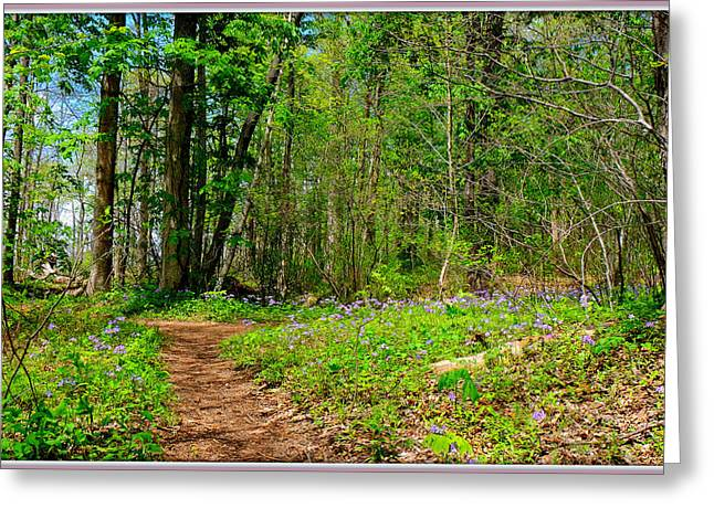 Print Photographs Greeting Cards - Flowered Path Greeting Card by Constance Lowery
