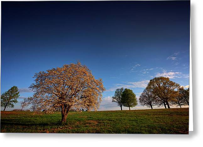Flowering Dogwood At Valley Forge Greeting Card by Rick Berk