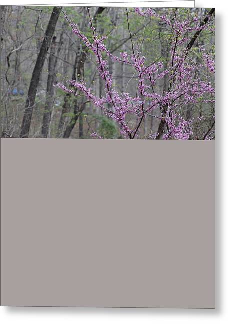 Devils Den Greeting Cards - Flowering Trees Greeting Card by Michael Munster