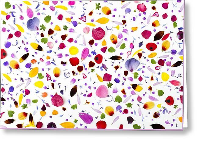 Flowermania Greeting Card by Tim Gainey
