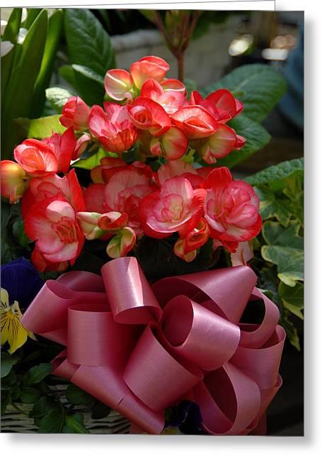 Blue Begonias Greeting Cards - Flowers 125 Greeting Card by Joyce StJames
