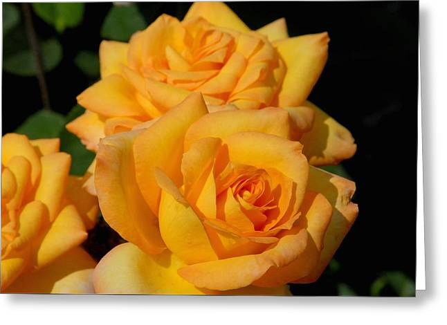 Roses Greeting Cards - Flowers 714 Greeting Card by Joyce StJames