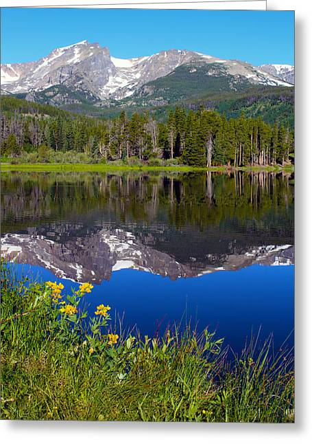 Flowers At Sprague Lake Greeting Card by Shane Bechler