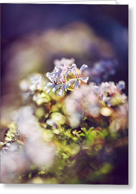 Close Focus Floral Greeting Cards - Flowers At Sunset Greeting Card by Eduardo Huelin
