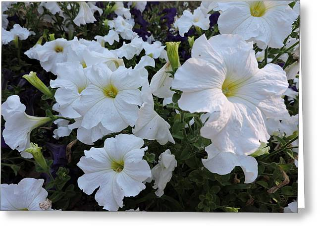 White Jewelry Greeting Cards - Flowers  Greeting Card by Clint  Saunders