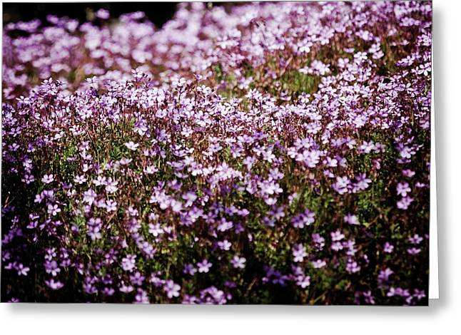 Extremadura Greeting Cards - Flowers Greeting Card by Felix M Cobos