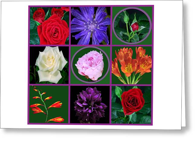 Fineartamerica Greeting Cards - Flowers Floral customize border color choose paper type n frames NavinJoshi FineArtAmerica Pixels  Greeting Card by Navin Joshi