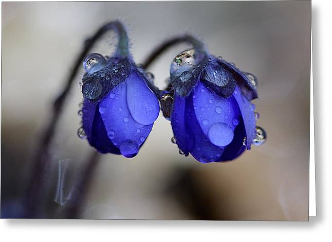 Flowers Fresh Rain Droplet Greeting Card by Romeo Koitmae