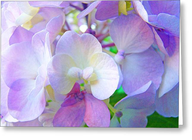 Purple Hydrangeas Greeting Cards - FLOWERS HYDRANGEAS Art Prints Floral Garden Baslee Troutman Greeting Card by Baslee Troutman