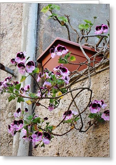 Erice Greeting Cards - Flowers in Erice Greeting Card by Beverly Kay