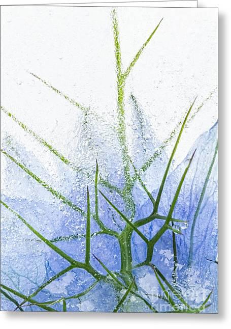 Damascena Greeting Cards - Flowers in Ice 2 Greeting Card by Ann Garrett