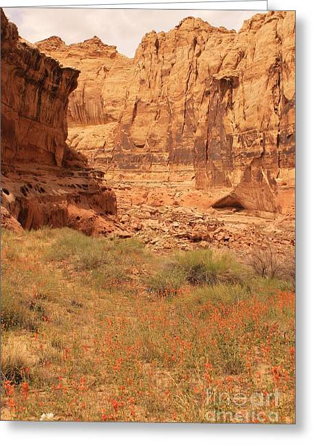 Slickrock Greeting Cards - Flowers in the Canyon Greeting Card by Tonya Hance
