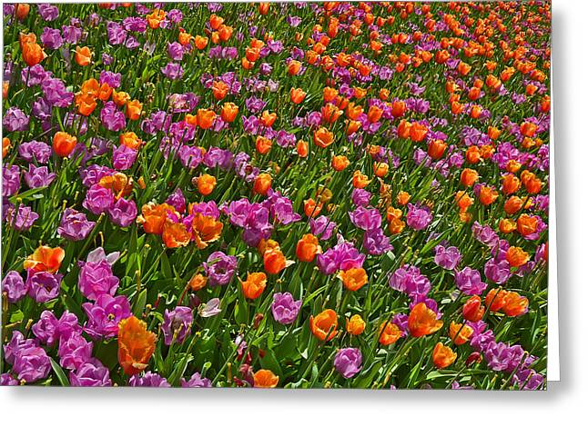 Merging Greeting Cards - Flowers. Koblenz. Germany. Greeting Card by Andy Za