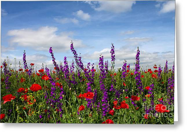 Flowers Photographs Greeting Cards - Flowers of the field Greeting Card by Diana Kraleva
