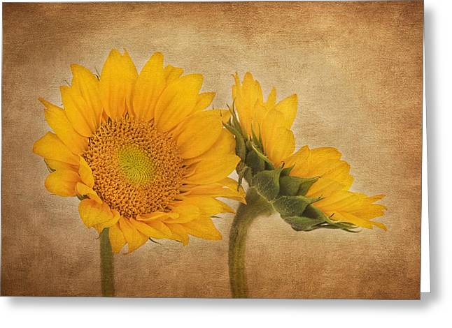 Flowers Of The Sun Greeting Card by Kim Hojnacki