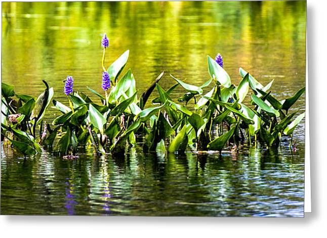 Aquatic Greeting Cards - Flowers on the Connecticut Greeting Card by Sherman Perry