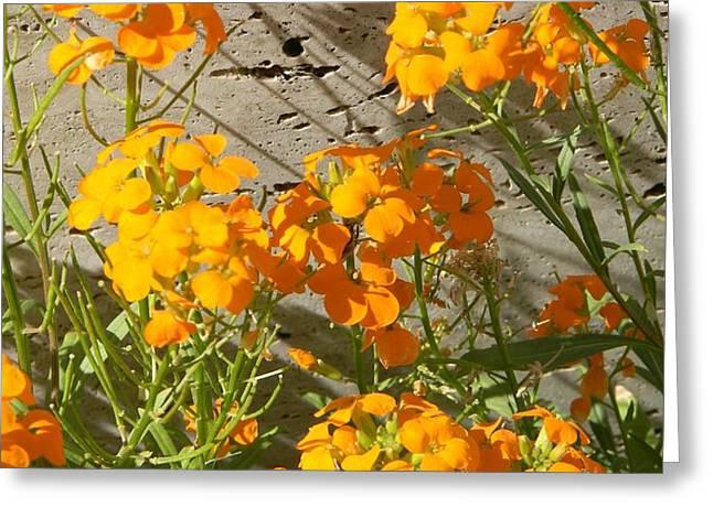 Flowers Orange 2 Greeting Card by Warren Thompson
