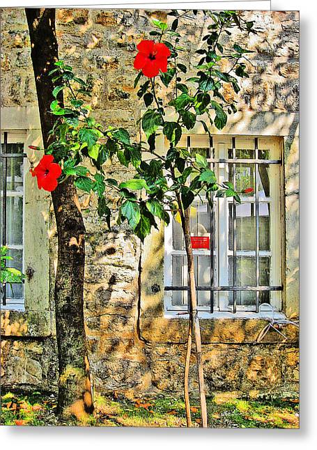 Cristoforo Greeting Cards - Flowers. Windows. Old fortress Greeting Card by Andy Za