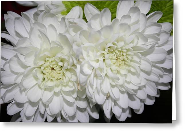 Stephen Melcher Greeting Cards - Flowers1-31 Greeting Card by Stephen Melcher