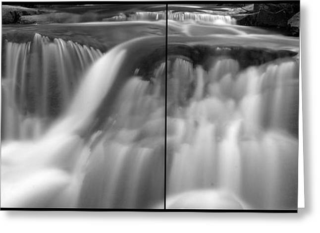Tree Roots Greeting Cards - Flowing Memories Greeting Card by Brad Scott