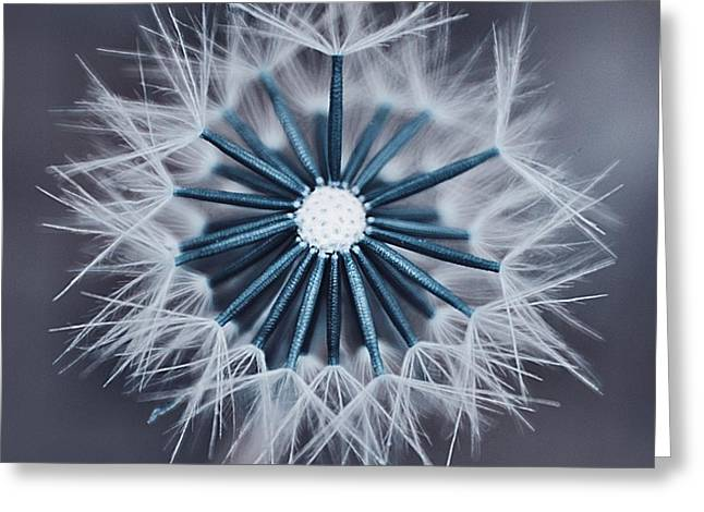 Grey Turquoise Greeting Cards - Fluffy Sun - 29bld2cr Greeting Card by Variance Collections