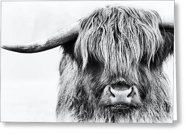 Black And White Cow Greeting Cards - Fluffys Mate Greeting Card by Tim Gainey