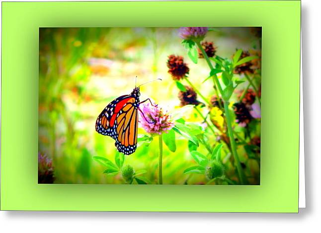 Sunlight On Flowers Greeting Cards - Flutter by Greeting Card by Karen Cook