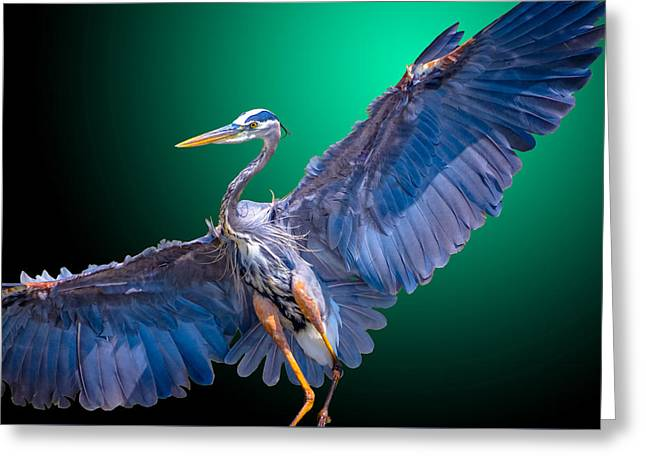 Aquatic Greeting Cards - Fly-By-Night Greeting Card by Brian Stevens
