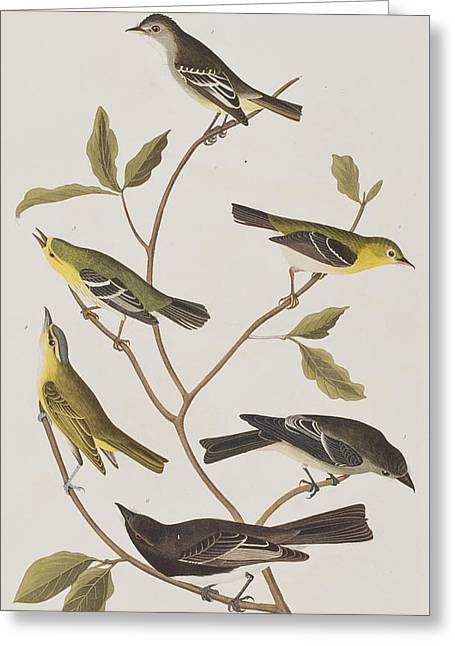 Warbler Greeting Cards - Fly Catchers Greeting Card by John James Audubon