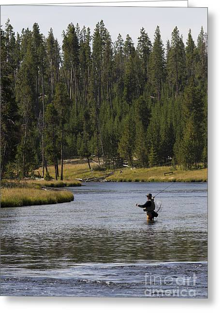 Fly Fishing In The Firehole River Yellowstone Greeting Card by Dustin K Ryan