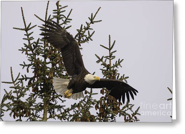 Tim Moore Greeting Cards - Fly Like an Eagle Greeting Card by Tim Moore
