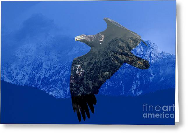 Fly Wild Fly Free Greeting Card by Sharon Talson