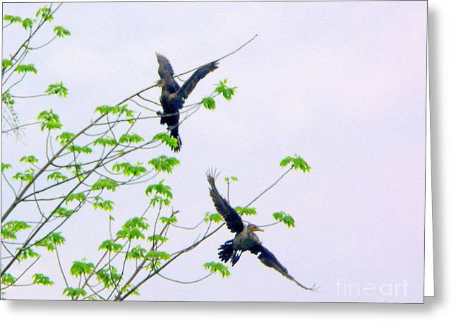 Bird In Tree Greeting Cards - Flyin High Greeting Card by Deborah MacQuarrie