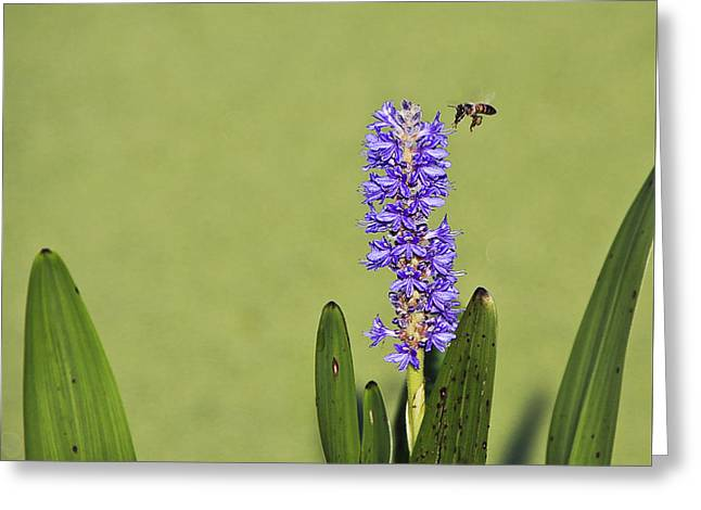Original Photographs Greeting Cards - Flying and Buzzing Greeting Card by Jon Glaser