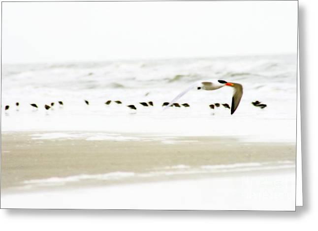 Tern In Flight Greeting Card by Angela Rath