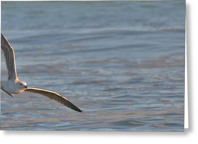 Flying Seagull Greeting Cards - Flying By Greeting Card by Russell Bonovitch