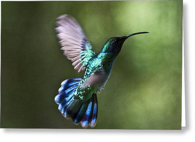 Kolibri Greeting Cards - Flying Emerald Greeting Card by Heiko Koehrer-Wagner