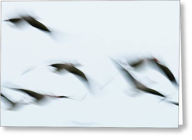 Abstract Movement Greeting Cards - Flying geese Greeting Card by Andy-Kim Moeller