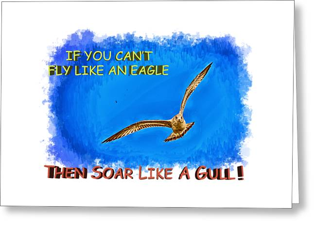 Flying Animal Greeting Cards - Flying Gull Greeting Card by John Bailey