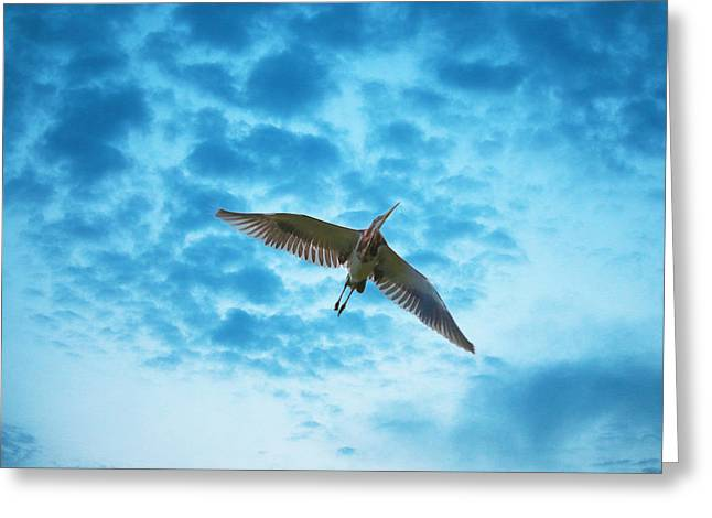 Flying Animal Greeting Cards - Flying High Greeting Card by Rick Leipold