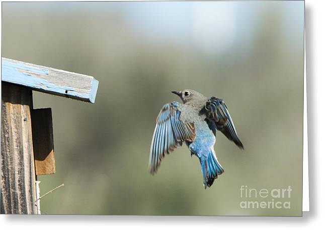 Flying Home Greeting Card by Mike Dawson