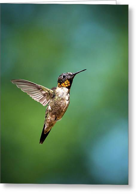 Hovering Greeting Cards - Flying Hummingbird Greeting Card by Christina Rollo