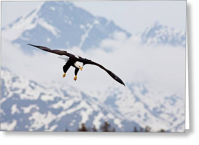 Haliaeetus Leucocephalus Greeting Cards - Flying in the Mountains Greeting Card by Tim Grams