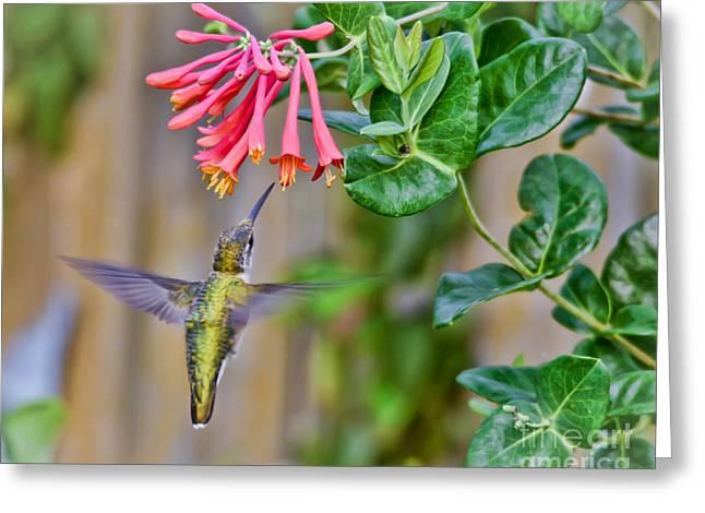 Flying Jewel Greeting Card by Kerri Farley